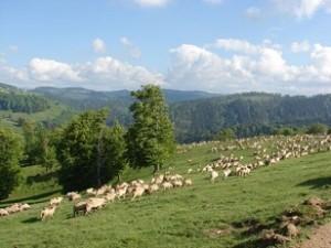 turma de oi sfantul dumitru